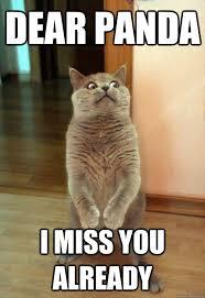 Dear Panda I Miss You Already Cat Meme - Cat Planet | Cat Planet via Relatably.com
