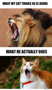 Cat Yawning | WeKnowMemes via Relatably.com
