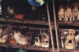 Schiavi innocenti condannati a morire lentamente per soddisfare la tua voglia di cucciolo a poco prezzo!