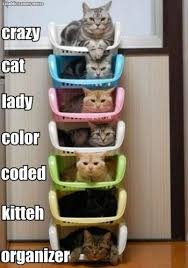 11 Best Pics of the Crazy Cat Lady Meme via Relatably.com
