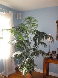 room plants x: plants in a living room plants in a living room