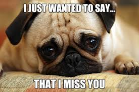 I Just Wanted To Say... That I Miss You - sad pug - quickmeme via Relatably.com