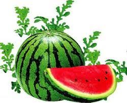 Bildergebnis für wassermelone