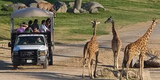 San Diego Zoo <b>Safari Park</b>