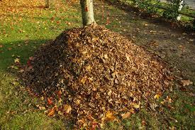 """Résultat de recherche d'images pour """"feuilles mortes"""""""
