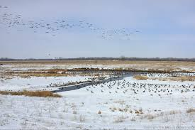 timelapse snapshots the prairie ecologist 12 06pm 25 2013 geese and mallards are among the