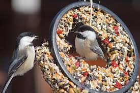 To Feed, or <b>Not</b> to Feed   Audubon
