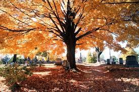 """Képtalálat a következőre: """"temetők"""""""