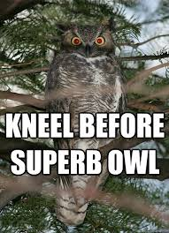 Superb Owl memes | quickmeme via Relatably.com