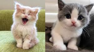 Baby <b>Cats</b> - <b>Cute</b> and <b>Funny</b> Baby <b>Cat</b> Videos Compilation - YouTube