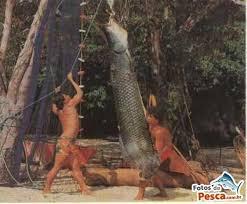 Resultado de imagem para IMAGENS DE JACUNDÁ PEIXE WIKIPEDIA