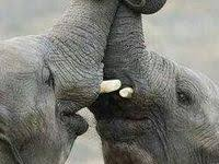 331 Best <b>Elephants</b> images in 2020 | <b>Elephant</b> love, <b>Animals</b> ...