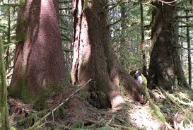 protect oregon s forests from logging road pollution oregon a