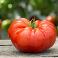 Image result for luscious tomato plants