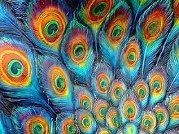 Risultati immagini per coda pavone dipinto