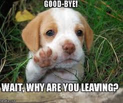 Good Bye See You Around Sad Dog Meme Generator - meme creator bye ... via Relatably.com