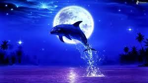 Znalezione obrazy dla zapytania delfin