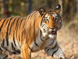 Kaimoor Wildlife Sanctuary