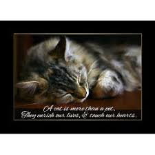 Cats Pets Passing Away Quotes. QuotesGram