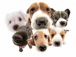 Resultado de imagen para fotos de perros