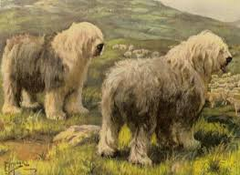 history already inparkinson wrote in his essay about livestock he describes a dog that could be recognised as an old english sheepdog