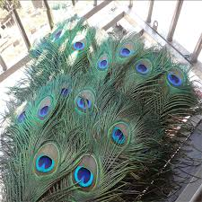 <b>Top quality peacock feathers</b> 20 Pcs/lot, length 25 32 CM beautiful ...