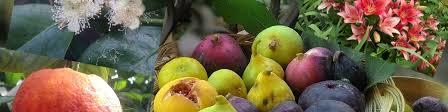 Цитрусовые, виноград и другие растения. Крым | ВКонтакте
