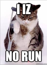I Run With It — Running Meme Friday: Injured Cat via Relatably.com
