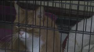 Meet some <b>cute cats</b> and donate to Columbiana County Humane ...