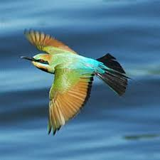 Image result for migratory birds