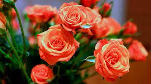 <b>Букет роз</b> - <b>цветок</b> с любовью