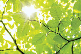 <b>leaf</b> | Definition, Parts, & Function | Britannica