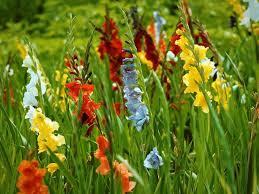 Risultati immagini per prato pieno di tanti fiori colorati