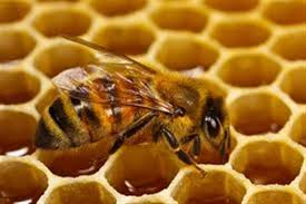 Αποτέλεσμα εικόνας για ελληνικο μελι