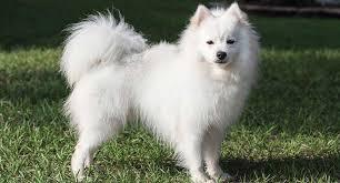 <b>Shiba Inu</b> Dog Breed Profile | Petfinder