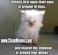 New Trending Popular Memes   Clean Memes – The Best The Most Online via Relatably.com
