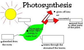 short essay on the significance and mechanism of photosynthesis photosynthesis what goes in and out how does the scientific