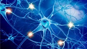 Výsledek obrázku pro nervous system