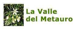 Carex hirta - La Valle del Metauro