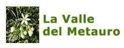 Silene ciliata graefferi - La Valle del Metauro