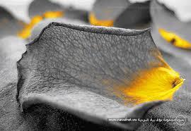 ربنا ابدع في كونه لااله الا الله images?q=tbn:ANd9GcT