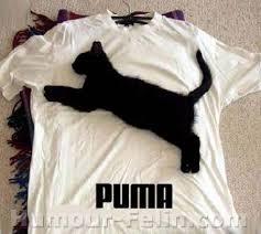 Résultat de recherche d'images pour 'lol chat'
