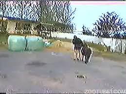 Horse Porn Videos / Most Viewed / Page 4 / Zoo Tube 1