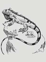 <b>Iguana</b> Men's <b>T</b>-<b>Shirts</b> | Redbubble