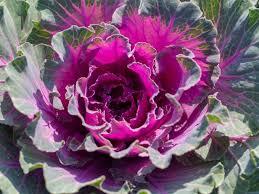 Gardening Ideas and Inspiration   HGTV