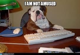 I Am Not Amused - Dog Boss meme on Memegen via Relatably.com