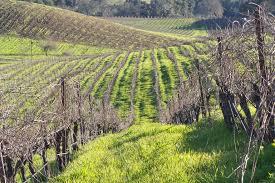 tablas creek vineyard blog winter vineyard photo essay after the green vine contours