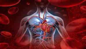 Image result for aliran oksigen dalam badan