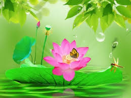 Image result for beautiful lotus