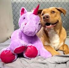 Stray <b>Dog</b> Who Kept Stealing Stuffed <b>Unicorn</b> Finds New Home With ...